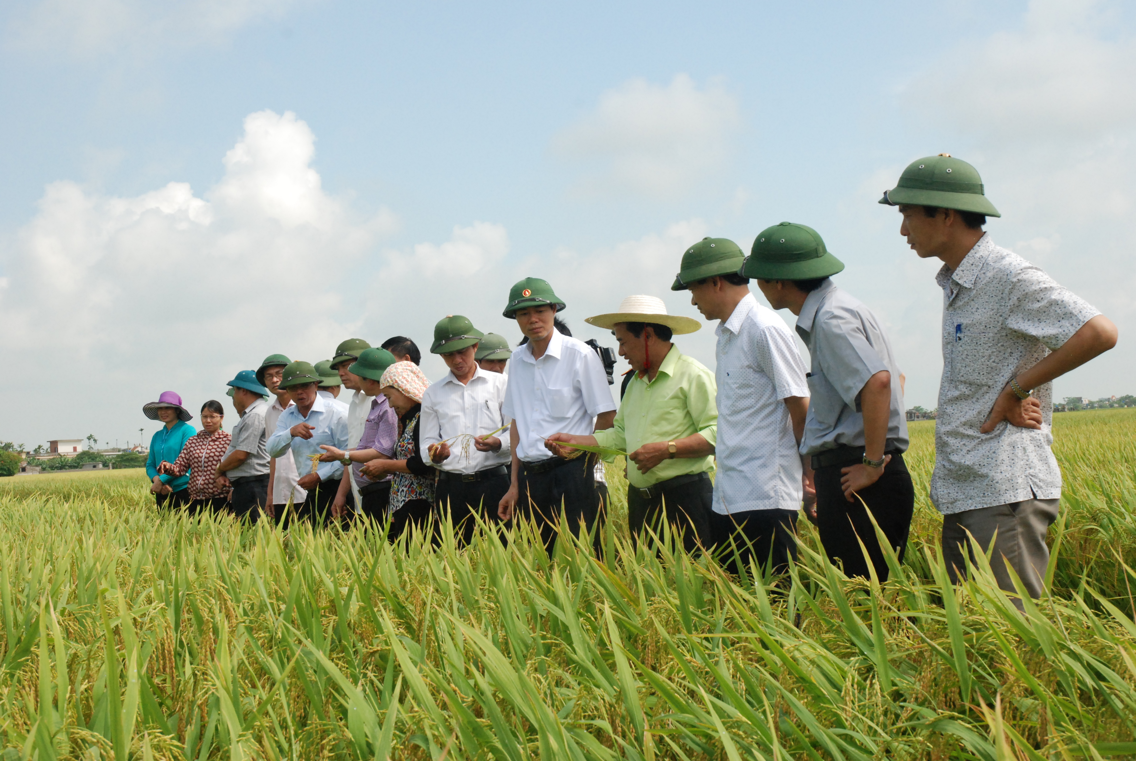 Hình 3. Lãnh đạo huyện thăm đồng và đánh giá năng xuất lúa