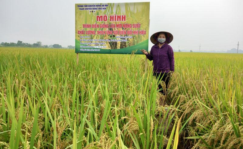 Vụ mùa 2021, huyện Ứng Hòa thắng lợi toàn diện.