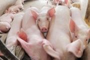 Không nên để DN tự công bố tiêu chuẩn thực phẩm