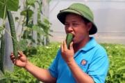 Mạnh dạn làm nông sản an toàn