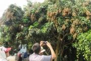 Trung Quốc ồ ạt nhập khẩu hàng từ Việt Nam