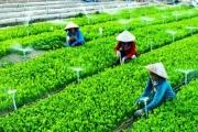 Năm 2020 có 15.000 HTX nông nghiệp hoạt động hiệu quả