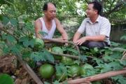 500 cán bộ khuyến nông mất việc: GĐ Khuyến nông Quốc gia lên tiếng
