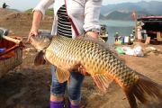 Nhiều loài cá đặc sản 'khủng' ở chợ đầu mối trên núi