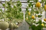 Triển vọng phát triển IoT trong nông nghiệp tại Việt Nam
