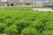 Không liên kết lớn, nông nghiệp 4.0 khó thành công