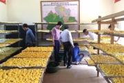 Phát huy hiệu quả mô hình sản xuất tinh bột Nghệ tại Làng thanh niên lập nghiệp biên giới Tam Hợp