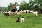 Làm giàu từ nuôi dê trên vùng đất nhiễm mặn