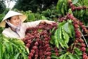 Chiến tranh thương mại Mỹ - Trung: Thủy sản được lợi, cà phê ít ảnh hưởng