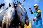 Xuất khẩu cá ngừ khởi sắc trở lại