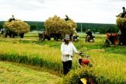 Tín dụng ngân hàng đã giúp gì cho nông nghiệp?