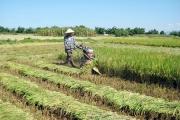 Nhiều đối tượng hưởng lợi miễn, giảm thuế đất nông nghiệp