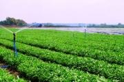 Cho vay ưu đãi nông nghiệp - nông thôn lãi suất 9%