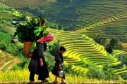 Người Việt đi đâu nhiều nhất dịp Tết dương 2019?