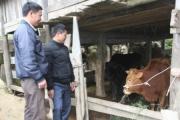 Phát triển chăn nuôi ở Hoàng Su Phì