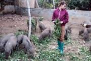 Gái xinh 9X bỏ công nhân về nuôi loài lợn lông cứng như chổi xể