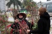 Đào Nhật Tân giá gần 1 triệu đồng/cành, người dân vẫn ùn ùn kéo đến mua sắm