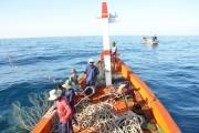 Ngư dân bám biển xuyên tết, săn luồng cá chuồn cồ bay khắp mặt biển