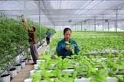 """Dẹp """"xin-cho"""", mời doanh nghiệp đầu tư nông nghiệp"""