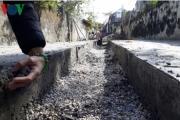 Đổ bê tông xây đường nông thôn mới, xi măng 5 ngày không đông kết