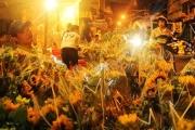 Có một Sài Gòn hoa lệ cũng e lệ trước hoa đêm