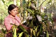 Làm giàu khác người: Biến đất rẫy thành vườn lan bạc tỷ