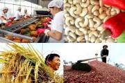 Tìm thấy cơ hội xuất khẩu nông sản của Việt Nam tại BRIFE 2019