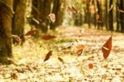 Hà Nội ngỡ ngàng, đẹp dịu dàng mùa lá rụng