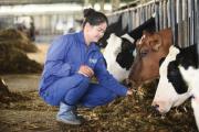 6 thập kỷ làm sữa tươi sạch của 'chuyên gia bò sữa' Mộc Châu Milk