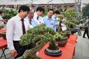 Phi điệp tiền tỷ và cả ngàn tác phẩm bonsai hội tụ trước ngày Giỗ Tổ