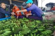Bán chuối, thanh long… mang lại cho bầu Đức doanh thu gần 3.000 tỉ đồng