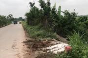 Hà Nội (Phúc Thọ): Chính quyền xã Liên Hiệp chôn lợn chết ngay cạnh đường quốc lộ?