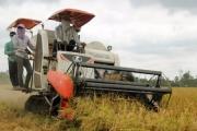 Trồng nhiều lúa vẫn nghèo: Tổ chức lại liên kết sản xuất, tiêu thụ