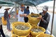 """Nhiều cách nuôi, trồng mới giúp nông nghiệp Kiên Giang """"cất cánh"""""""
