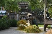 Làng cổ Ước Lễ đẹp như tranh mùa thu hoạch lúa