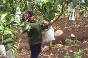 Muốn nâng cao giá trị nông sản, nhất thiết phải kiểm soát tốt ATTP