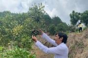 """Trang trại """"khổng lồ"""" trồng loài cây ra hạt ví như """"hoàng hậu"""" quả khô"""