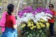 Giữa phố thị đông đúc nhất Việt Nam, vẫn có vườn lan thu 5 tỷ/năm
