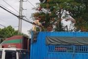 CSGT Hà Nội huy động tài xế container xử lý dây điện rơi xuống đường