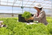 Việt Nam muốn có 4.000 doanh nghiệp lớn làm nông nghiệp