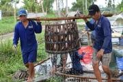 Bài học từ sản xuất và thị trường cá tra