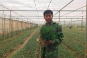 """Chàng 9X xứ Thanh bỏ lương """"khủng""""... về làng trồng hành"""