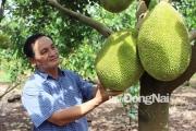 Trồng toàn trái cây ngon khiến du khách kéo tới ngày càng đông