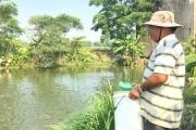 Tỷ phú nuôi cá nước ngọt đất Quảng Nam