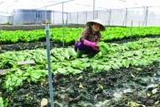 TP.HCM: Loay hoay với nông nghiệp 4.0