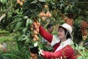 Ứng dụng khoa học công nghệ trong nông nghiệp vùng DTTS: Vẫn còn nhiều khó khăn
