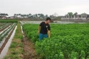 Chàng kỹ sư trẻ khai thác 'mỏ vàng xanh' trên đất lúa
