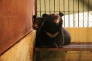 Liên đoàn Xiếc Việt Nam bị phạt 150 triệu đồng vì nuôi trái phép 2 cá thể gấu ngựa