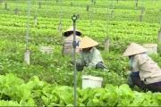 Quy định hoạt động đặc thù của HTX nông nghiệp