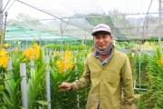Loài lan kiêu sa nơi núi rừng Đà Nẵng cho thu nhập 30 triệu/tháng